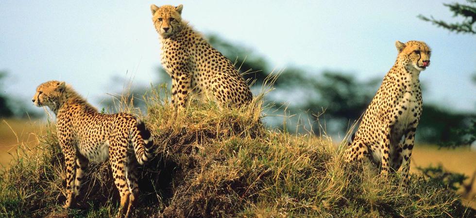 Safari Animal Gifts
