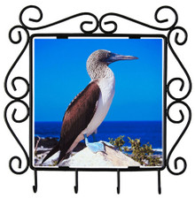 Blue Footed Booby Metal Key Holder