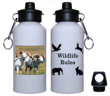 Big Horned Sheep Aluminum Water Bottle