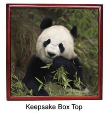Panda Bear Keepsake Box