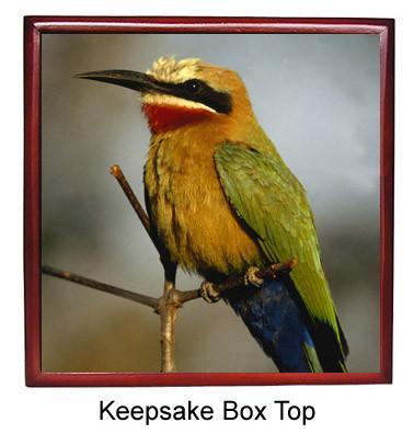 Bee Eater Keepsake Box
