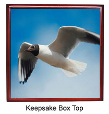 Black Headed Gull Keepsake Box