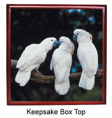Cockatoo Keepsake Box