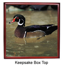 Duck Keepsake Box