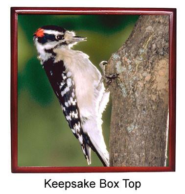 Downey Woodpecker Keepsake Box