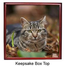 Tabby Cat Keepsake Box