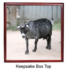 Goat Keepsake Box
