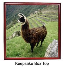 Llama Keepsake Box