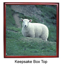 Sheep Keepsake Box