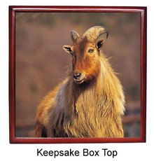 Mountain Goat Keepsake Box