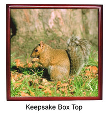 Squirrel Keepsake Box