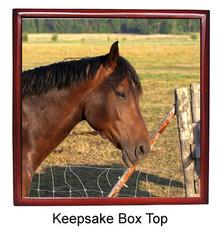 Horse Keepsake Box