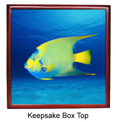 Angelfish Keepsake Box