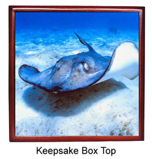 Stingray Keepsake Box