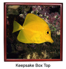Yellow Tang Keepsake Box
