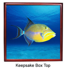 Triggerfish Keepsake Box