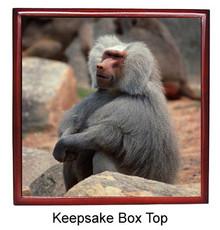 Baboon Keepsake Box