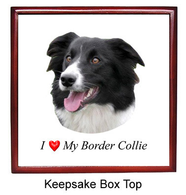 Border Collie Keepsake Box