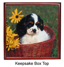 Cavalier King Charles Keepsake Box