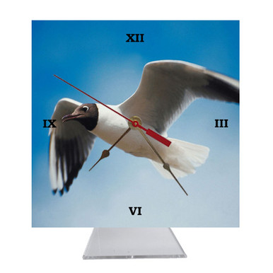 Black Headed Gull Desk Clock