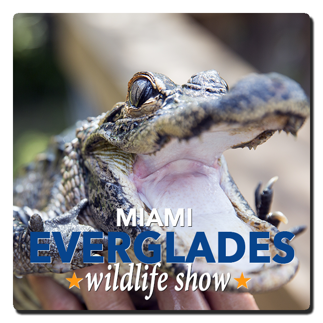 Miami Everglades Tours