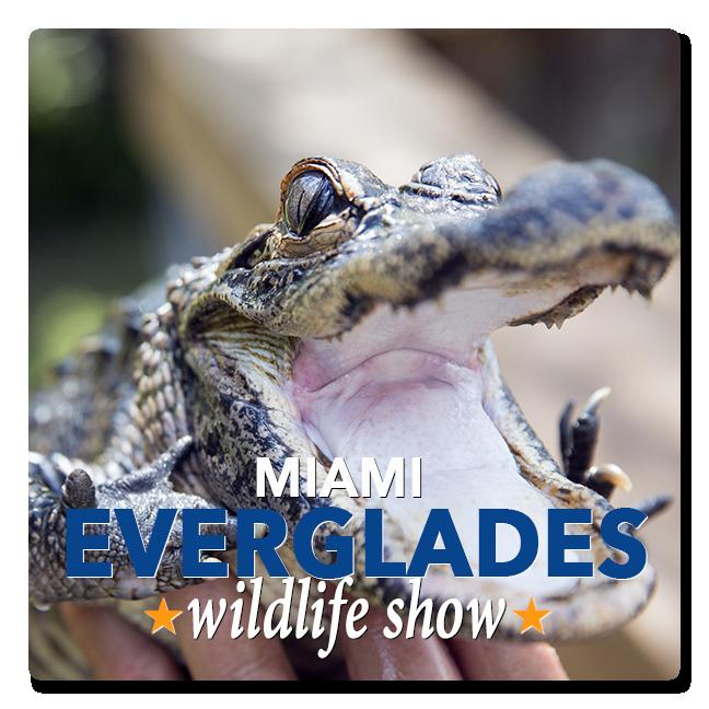Miami Everglades Tours