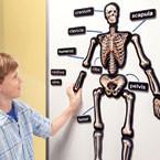 3-D Magnetic Skeleton