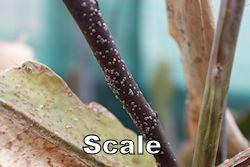 scale250.jpg