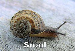 snail250.jpg