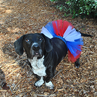 July 4th Doggie Tutu DIY