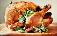 Jive Turkey  - Thanksgiving Deal