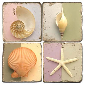 Colorful Shell Coaster Set