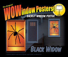 black widow in a house