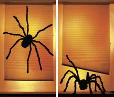 Shady spiders posters