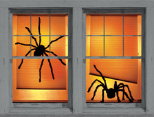Shadys spider posters as seen in windows