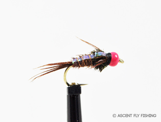Hot pink beadhead pheasant tail flashback ascent fly fishing for Ascent fly fishing