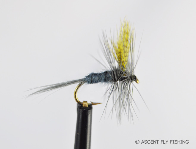 Dark hendrickson ascent fly fishing for Ascent fly fishing