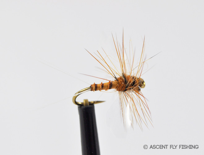 Hendrickson spinner ascent fly fishing for Ascent fly fishing