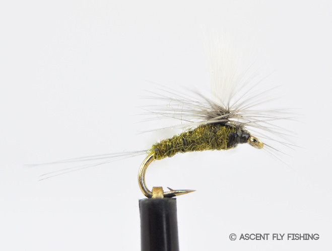 Parachute bwo ascent fly fishing for Ascent fly fishing
