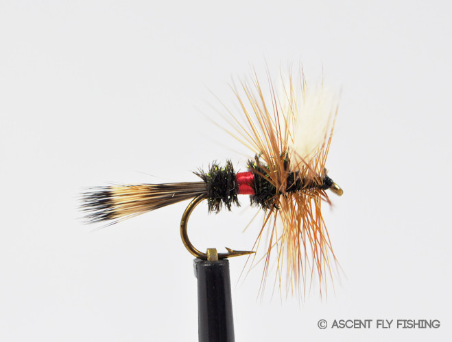 Royal wulff ascent fly fishing for Ascent fly fishing