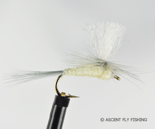 Parachute pmd ascent fly fishing for Ascent fly fishing