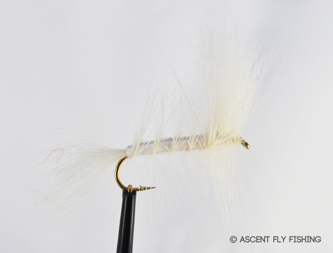 Albino hex ascent fly fishing for Ascent fly fishing