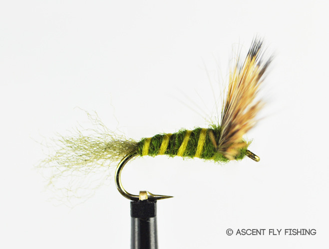 Green drake sparkle dun ascent fly fishing for Ascent fly fishing