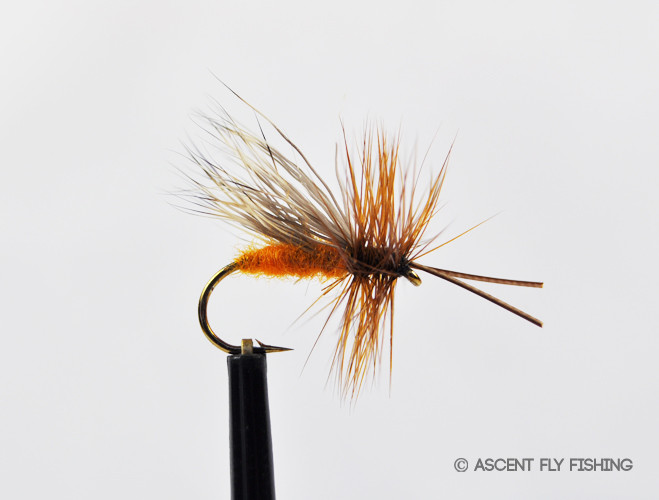October caddis ascent fly fishing for Ascent fly fishing