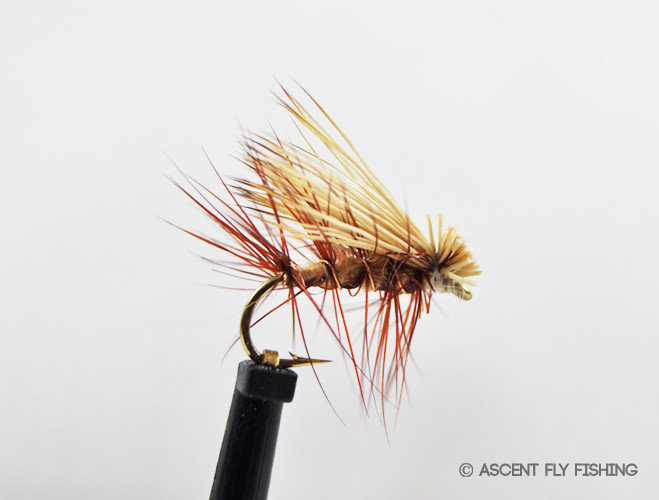 Elk hair caddis ascent fly fishing for Ascent fly fishing