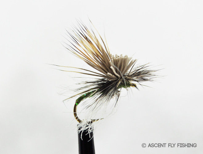 Missing link caddis ascent fly fishing for Ascent fly fishing