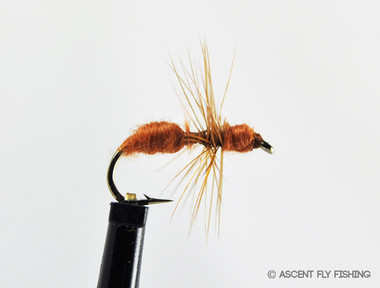 Ant ascent fly fishing for Ascent fly fishing