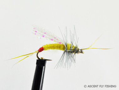 Flint 39 s yellow sally ascent fly fishing for Ascent fly fishing