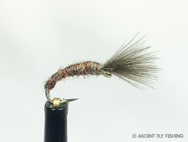 Mole fly ascent fly fishing for Ascent fly fishing