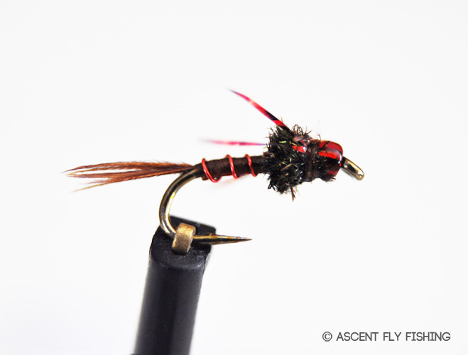 Red headed step child ascent fly fishing for Ascent fly fishing